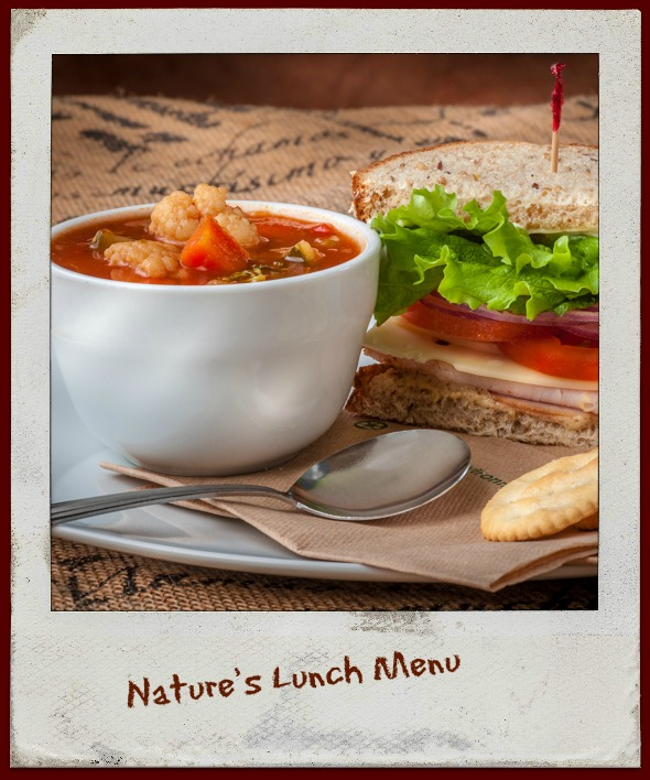 Nature's Lunch Menu and Features